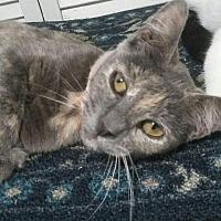 Adopt A Pet :: Gracie Mae - La puente, CA