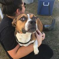 Adopt A Pet :: Isimbi - justin, TX