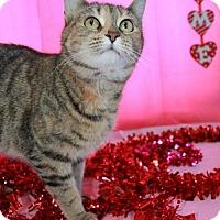 Adopt A Pet :: Chloe - Erwin, TN