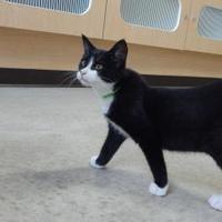 Adopt A Pet :: Keon - Monroe, WI