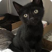 Adopt A Pet :: Berkley - East Brunswick, NJ