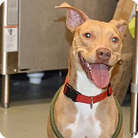 Adopt A Pet :: Taffy - Yonkers, NY