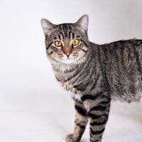 Adopt A Pet :: Julliard - Wausau, WI