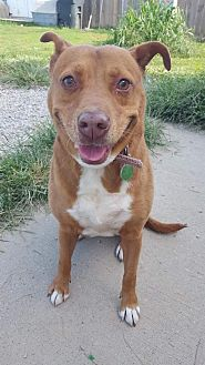 Adopt A Pet :: Libby  - Mt Vernon, IN