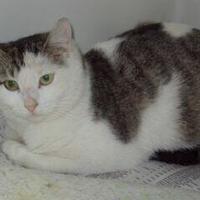 Adopt A Pet :: Lillian - Robinson, IL