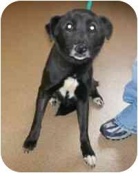 Labrador Retriever Mix Dog for adoption in Avon, New York - Tesa