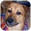 Photo 1 - Labrador Retriever/Shepherd (Unknown Type) Mix Dog for adoption in Olive Branch, Mississippi - Skye