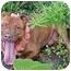 Photo 3 - American Pit Bull Terrier Dog for adoption in Huntington, New York - Heathcliff