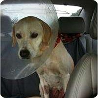 Adopt A Pet :: Nike - Altmonte Springs, FL