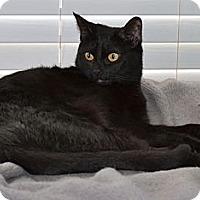 Adopt A Pet :: Bella - Fort Worth, TX