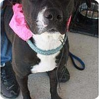 Adopt A Pet :: Roxy - Arlington, TX