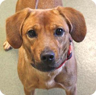Mountain Cur Mix Dog for adoption in Harrisonburg, Virginia - Laurie-Ann