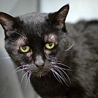 Adopt A Pet :: Minah - Philadelphia, PA