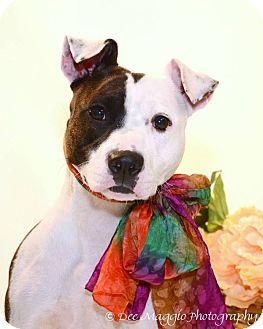 Terrier (Unknown Type, Medium) Mix Dog for adoption in Farmington Hills, Michigan - Jayla