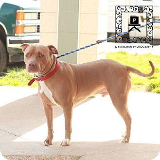 Pit Bull Terrier Mix Dog for adoption in Fredericksburg, Virginia - AL#15-1313