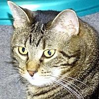 Adopt A Pet :: Priscilla - Mt. Vernon, NY