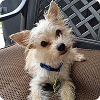 Adopt A Pet :: Sunny - Palm Coast, FL
