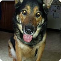 Adopt A Pet :: Diesel - Caledon, ON