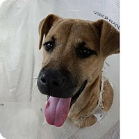 Adopt A Pet :: Buffy - West Hartford, CT