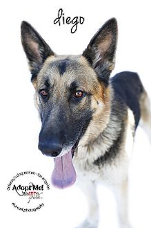 German Shepherd Dog Dog for adoption in Los Angeles, California - DIEGO