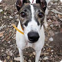 Adopt A Pet :: Extra Sassy - Gerrardstown, WV