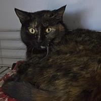 Adopt A Pet :: Amy - Santa Paula, CA