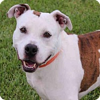 Adopt A Pet :: KB - West Palm Beach, FL