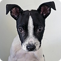 Adopt A Pet :: Donovan (California) - Fulton, MO