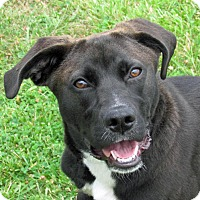 Adopt A Pet :: Winona - PUPPY - Madison, IN