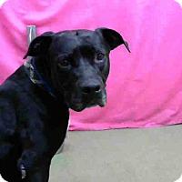 Adopt A Pet :: URGENT 6/27 @ DEVORE - San Bernardino, CA