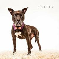 Adopt A Pet :: Coffey - Houston, TX