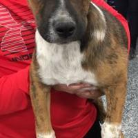 Adopt A Pet :: Kathon - Tucson, AZ