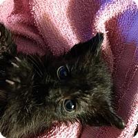 Adopt A Pet :: Frosty Feet - Armuchee, GA