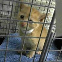 Adopt A Pet :: A290930 - Conroe, TX