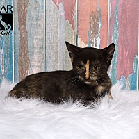 Adopt A Pet :: Isabelle - Tomball, TX