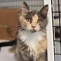 Adopt A Pet :: Karma - Lawrenceville, NJ