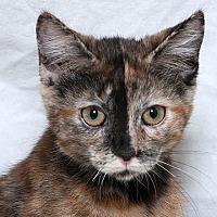 Adopt A Pet :: Leia W - Sacramento, CA