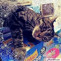 Adopt A Pet :: Quick Silver - Trevose, PA