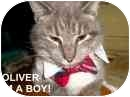Siamese Cat for adoption in Grove City, Ohio - Oliver