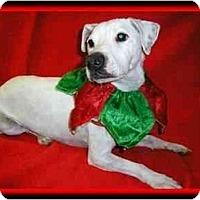 Adopt A Pet :: Chico - Omaha, NE