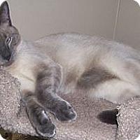 Adopt A Pet :: Marius - Gray, TN