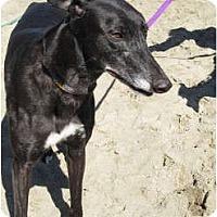 Adopt A Pet :: Ruff - Carlsbad, CA