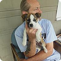 Adopt A Pet :: Ms Daisy - Cincinnati, OH