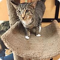 Adopt A Pet :: Loki - Monroe, GA