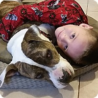 Adopt A Pet :: Dakota - Amazing temperament! - Temecula, CA