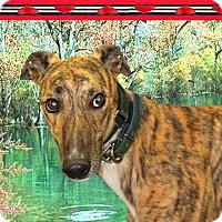 Adopt A Pet :: Bryson - Spencerville, MD