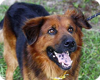 Chow Chow Mix Dog for adoption in Mayflower, Arkansas - Oakley