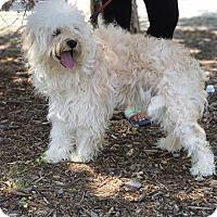 Adopt A Pet :: Rover - Van Nuys, CA