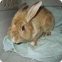 Adopt A Pet :: SHIMMER - Santa Maria, CA