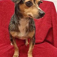 Adopt A Pet :: Kamali - Weston, FL
